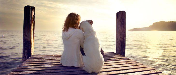 Cómo saber si tu perra está embarazada