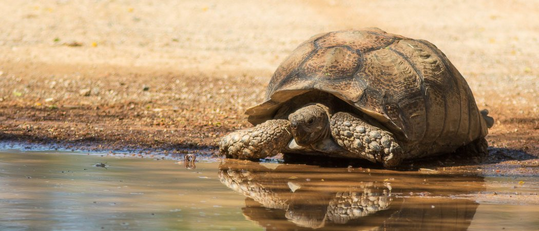 Tortugas de tierra o tortugas de agua, ¿cuál elijo como mascota?