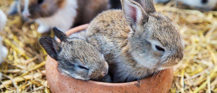 ¿Los conejos duermen?