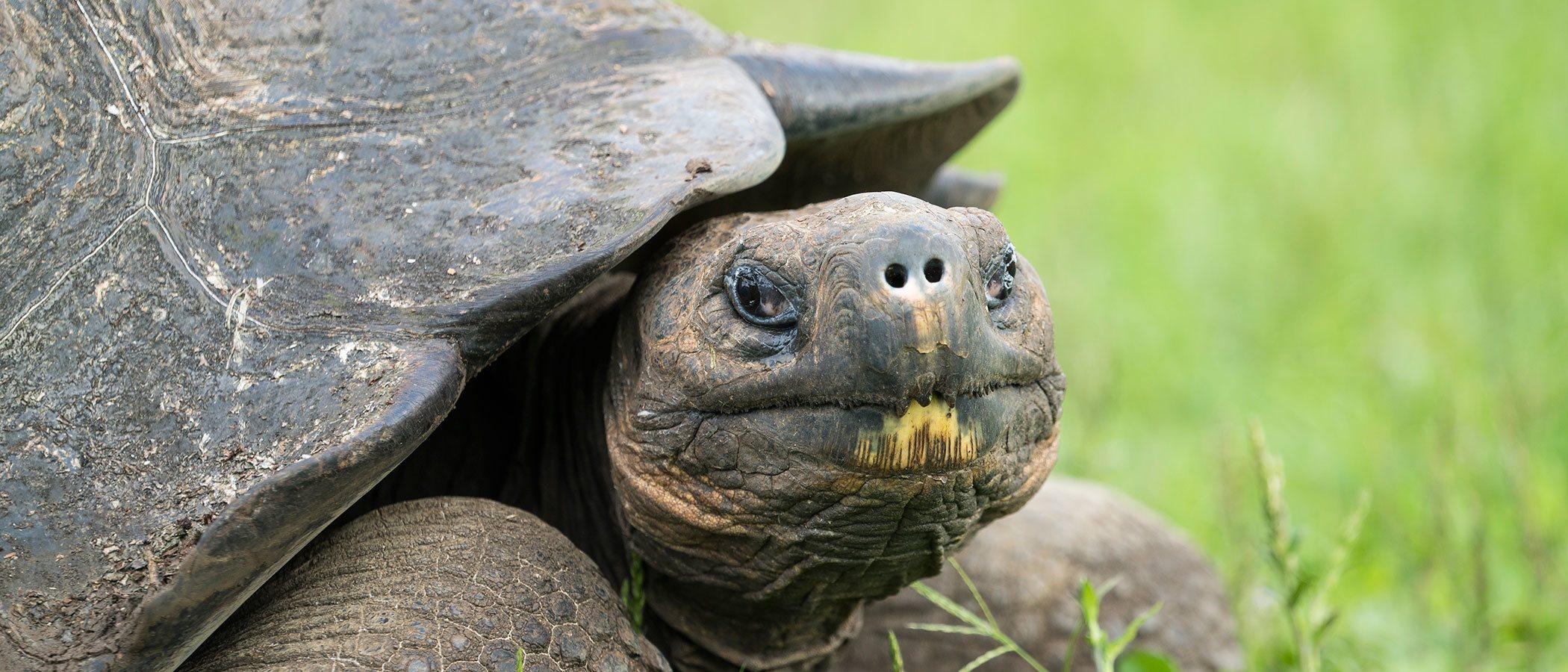 Las enfermedades más comunes de las tortugas