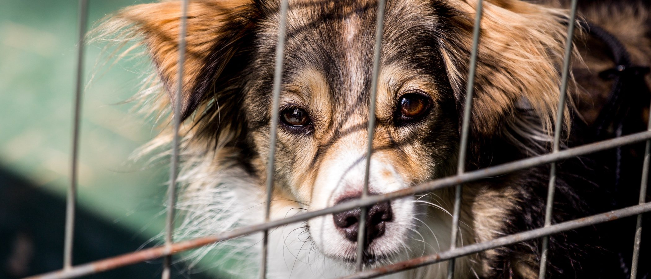 El comportamiento del perro, motivo principal del abandono de animales