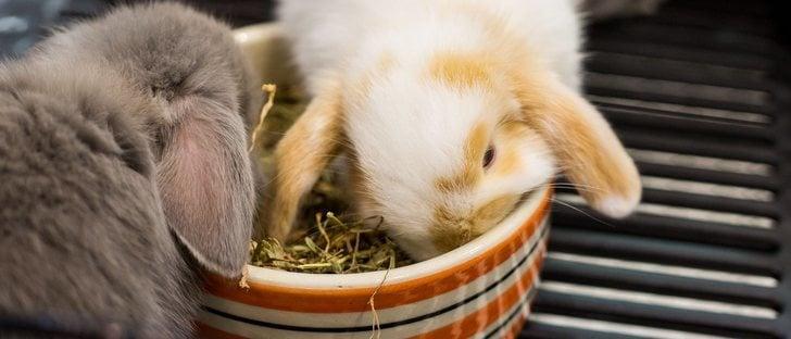 ¿Por qué mi conejo tira el comedero?