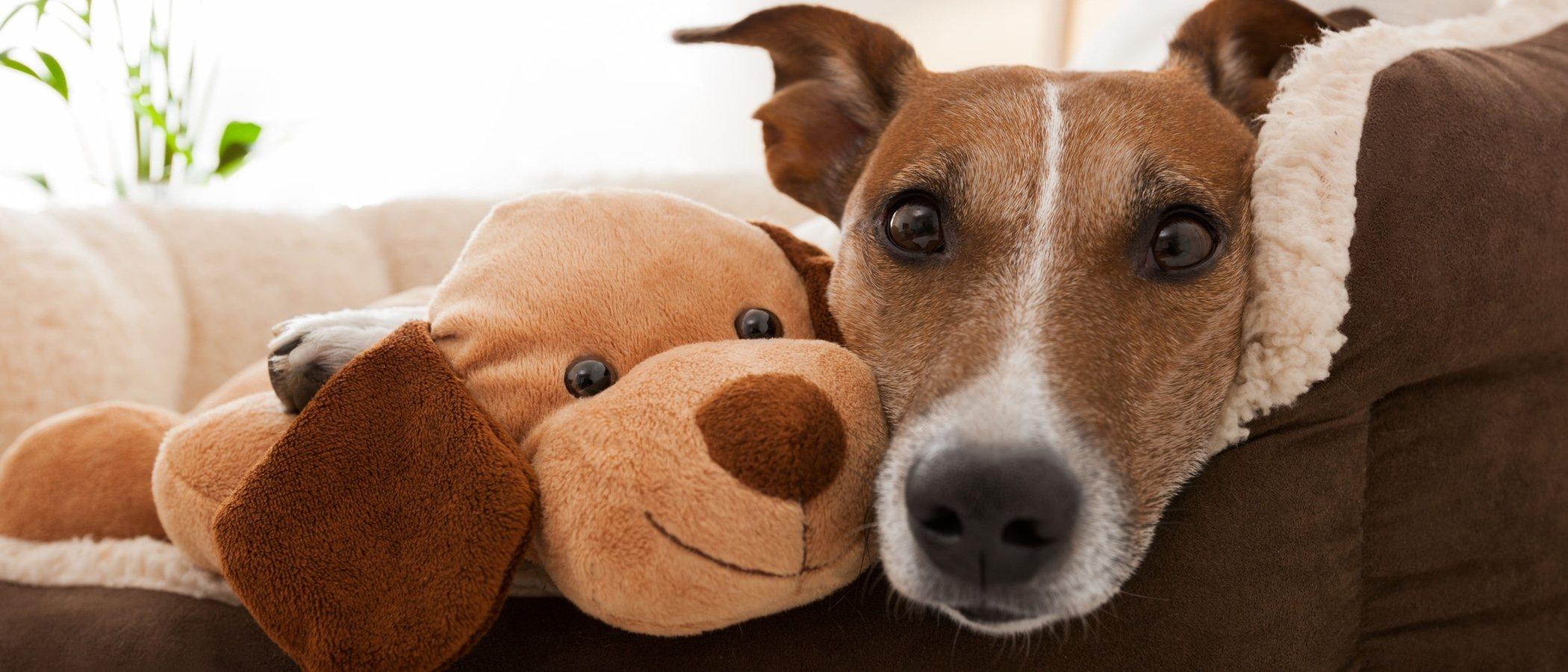 Las compañías de seguros también aseguran a tu mascota