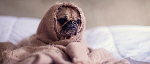 ¿Cómo afectan los cambios de tiempo a las mascotas?