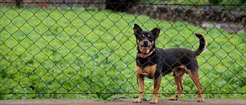 Cómo educar a un perro adoptado