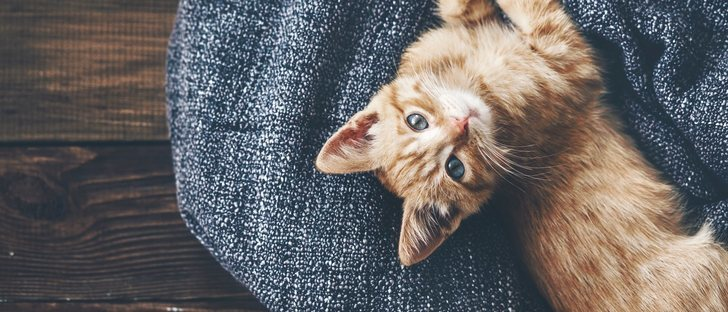 La alergia en gatos: síntomas y soluciones