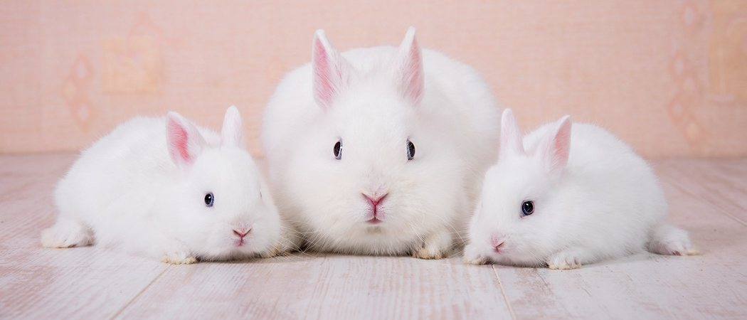 Embarazo en conejos: todo lo que necesitas saber