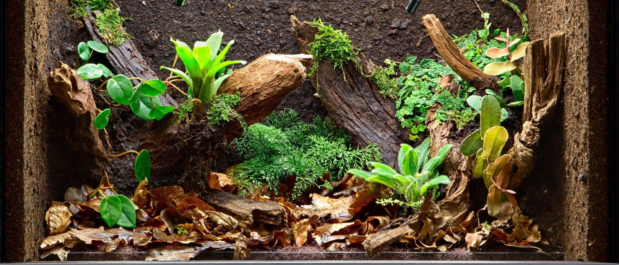 Elementos imprescindibles de un terrario