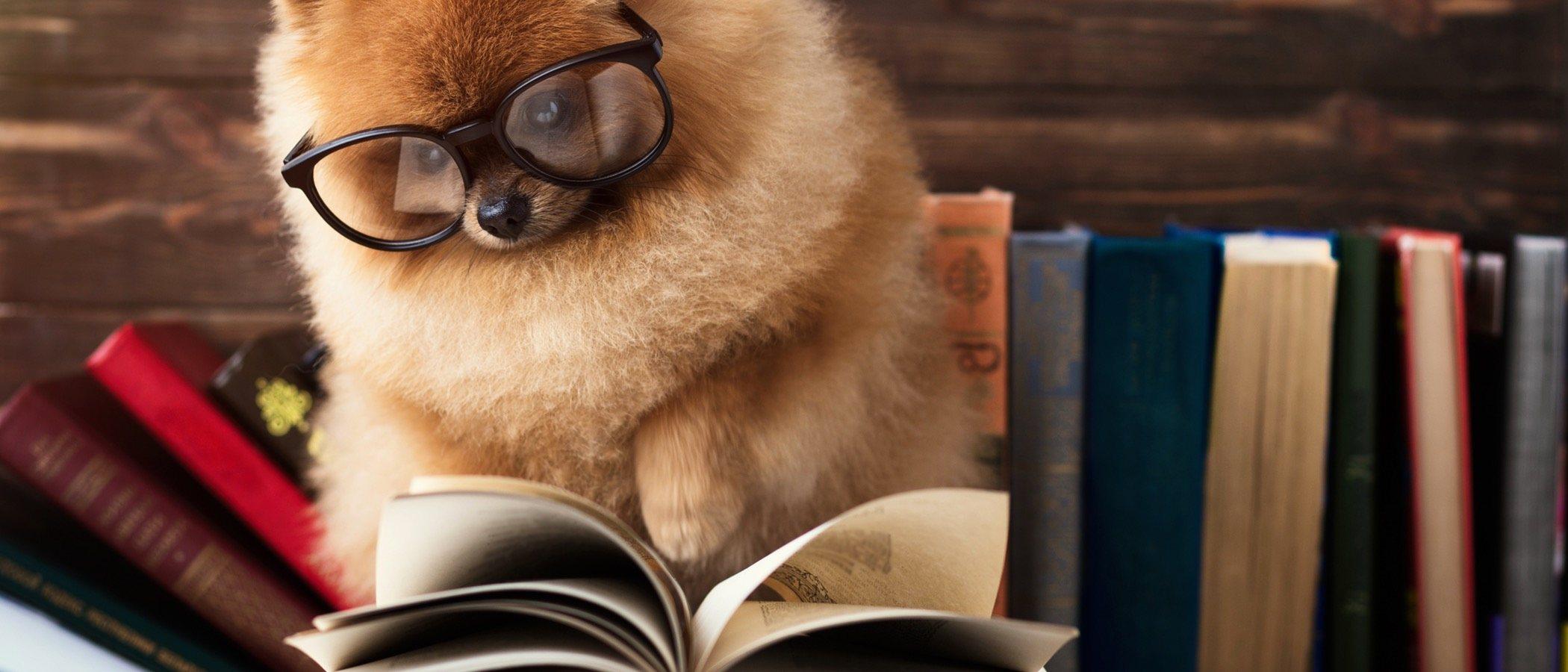 Los animales no son cosas: todo lo que necesitas saber sobre la Ley