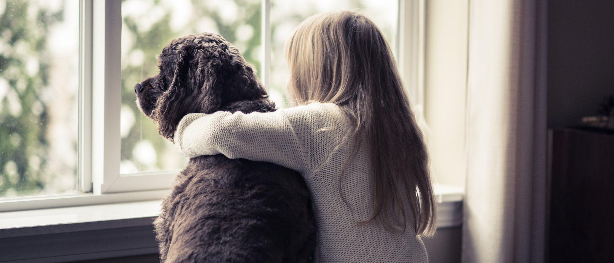 La adaptación de un perro adoptado a su nuevo hogar