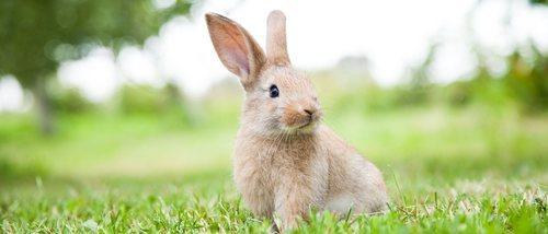 0236078164 Los sentidos de los conejos - Bekia Mascotas