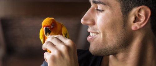 8 razones por las que tener un pájaro como mascota es buena idea