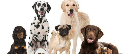 Clasificación de razas de perro por continente: Europa