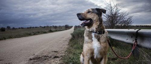 Leyes contra el abandono animal en España