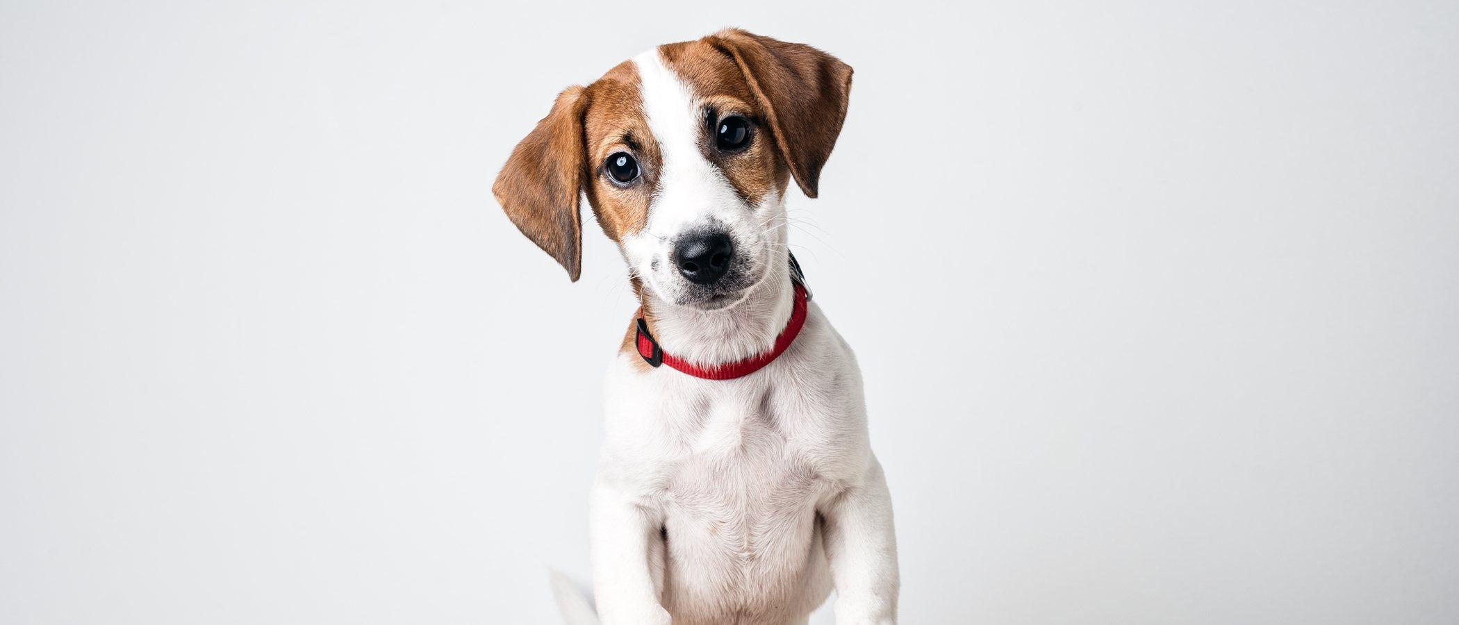 ¿Cómo llamo a mi perro si es macho?