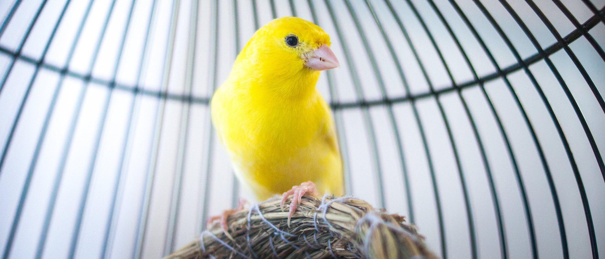 Los mejores pájaros para tener como mascota