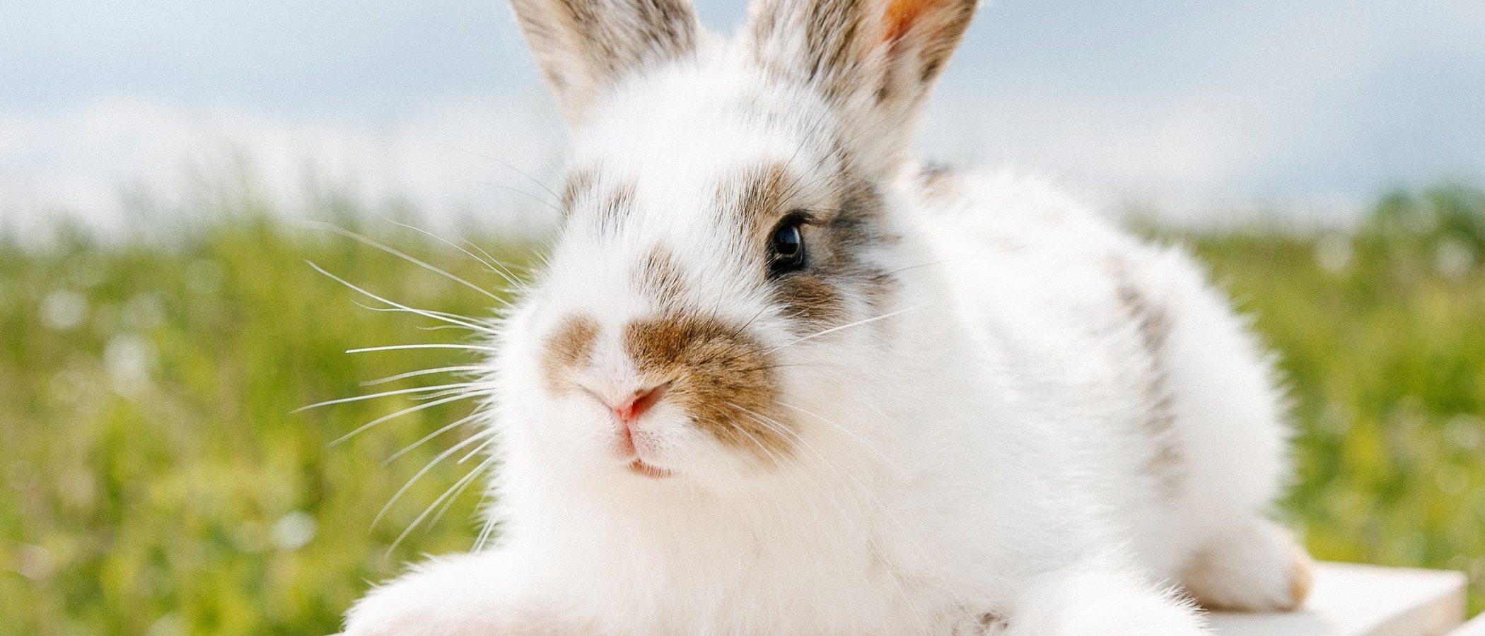 Trucos para que los conejos sobrelleven mejor el calor