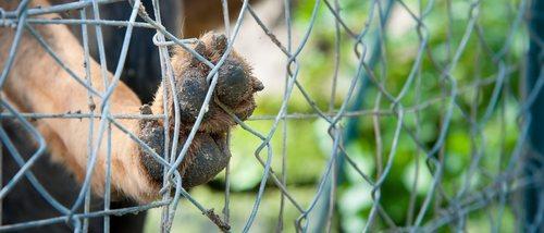 Abandono animal: una situación que permanece y que no se erradica