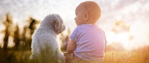 Mi perro tiene celos de mi bebé ¿Qué hago?