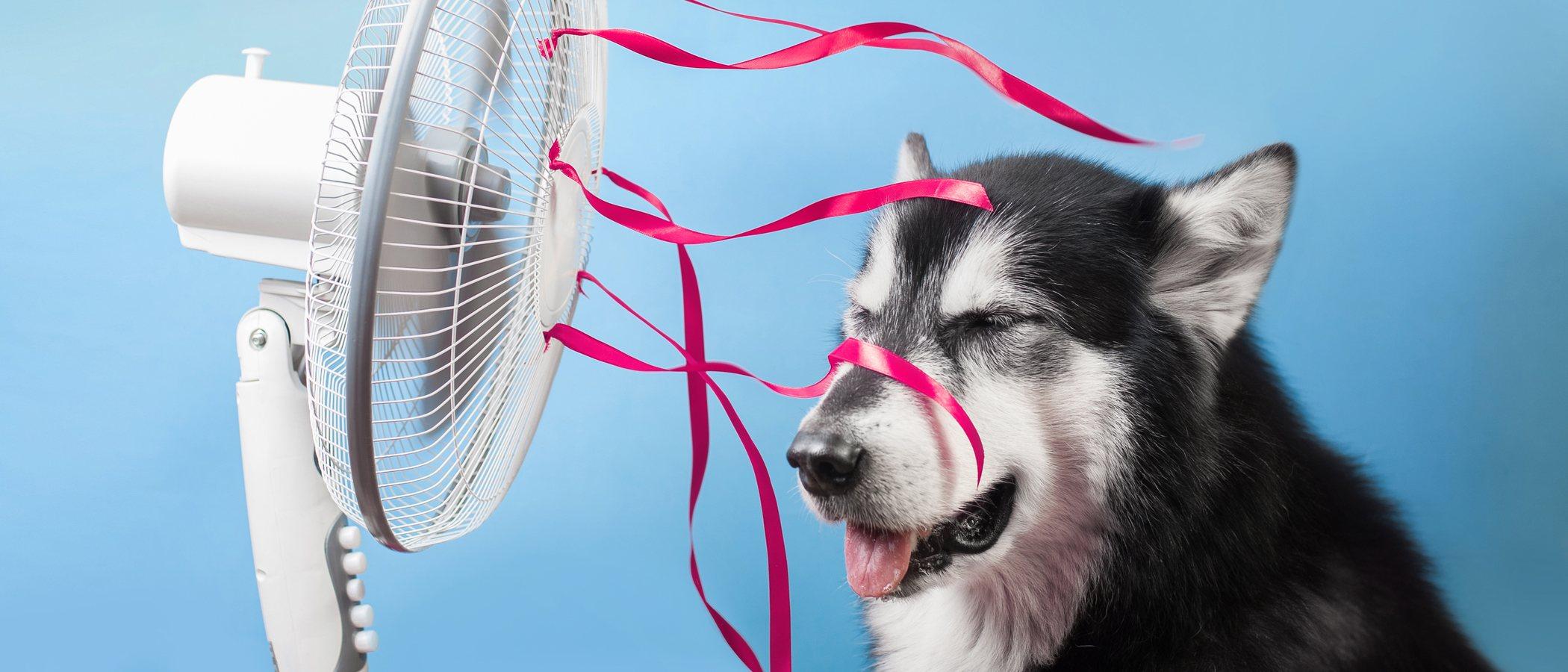 Consejos para que tu perro sobrelleve mejor el calor del verano