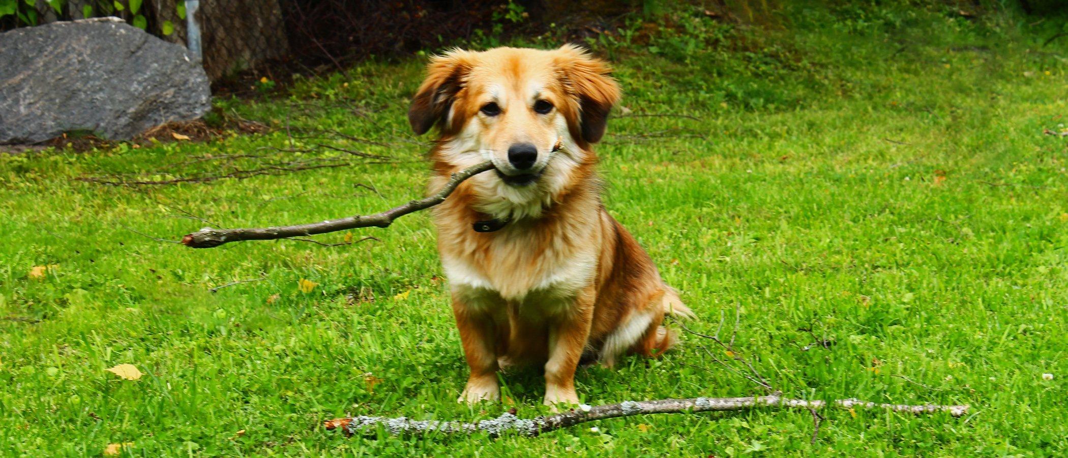 Mi cachorro no come: ¿Qué puedo hacer?