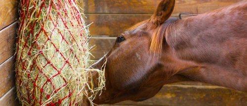 Alimentación de los caballos: consejos y recomendaciones