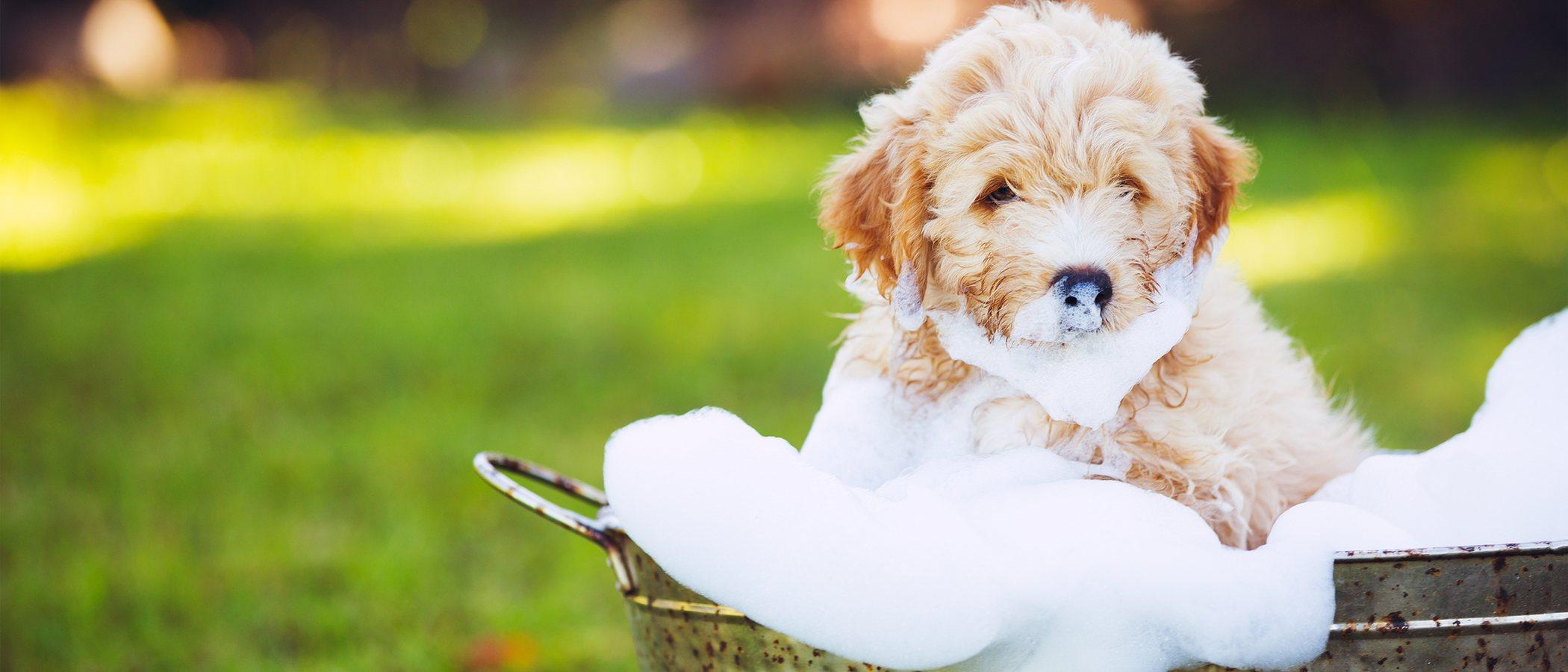 Cómo bañar a un perro que le tiene miedo al agua