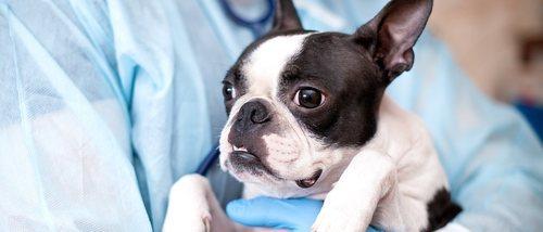 Cómo salvar la vida a tu mascota: primeros auxilios
