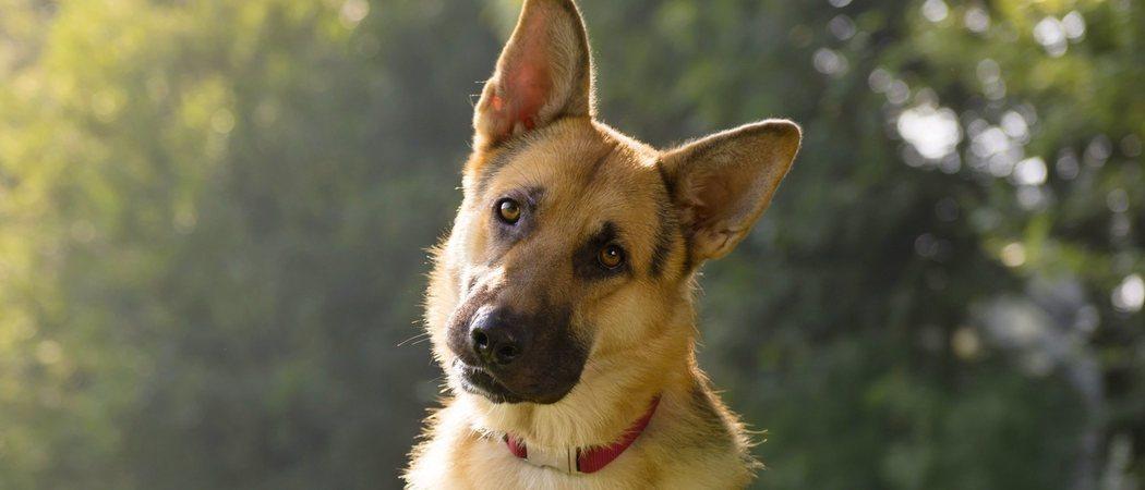 ¿Por qué los perros ladean la cabeza cuando les hablamos?