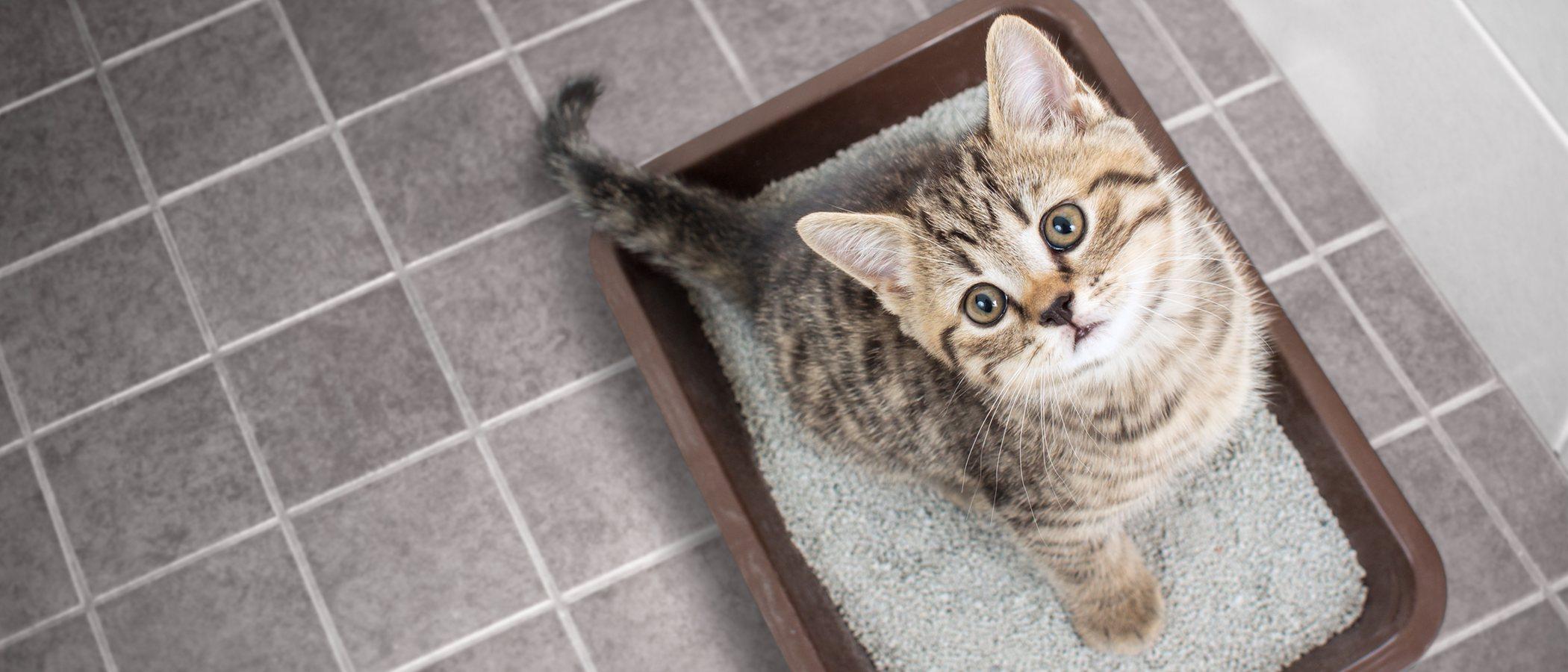Cómo hacer arena para gatos de forma casera