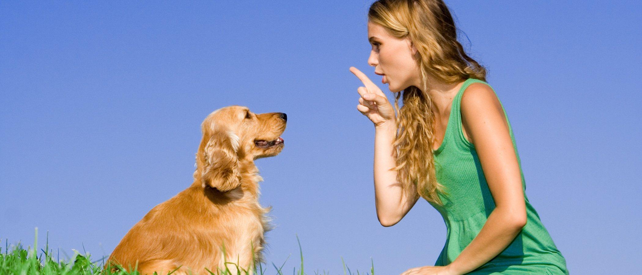 Perros celosos: trucos para educarles