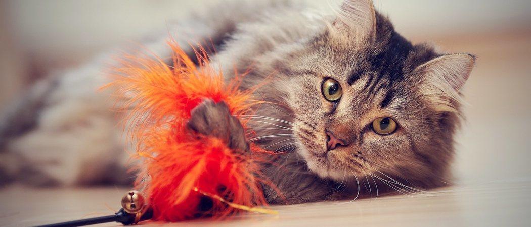 Cómo estimular la inteligencia de un gato