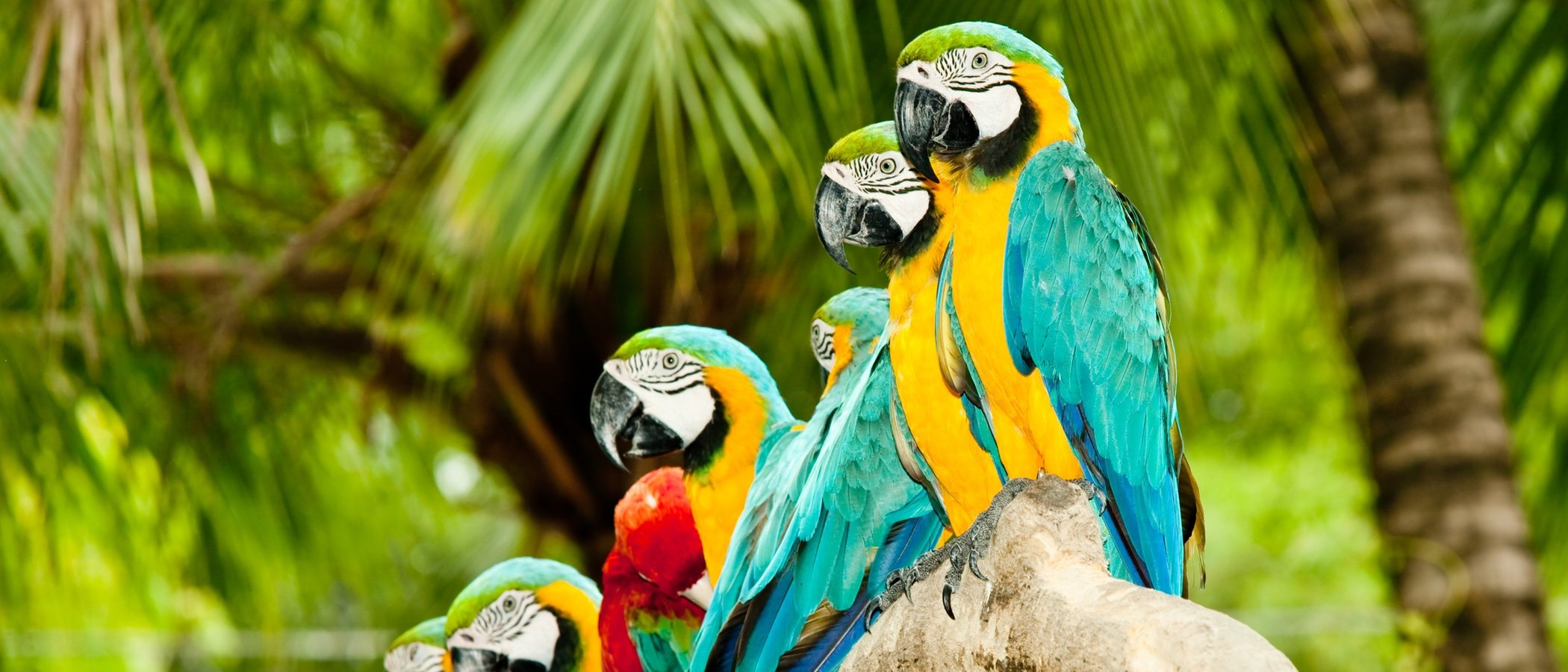 Loris y loriquitos: unas aves muy coloridas