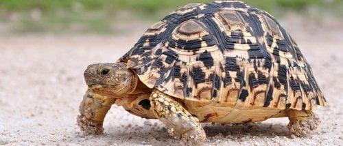 Infección ocular en tortugas: causas y soluciones