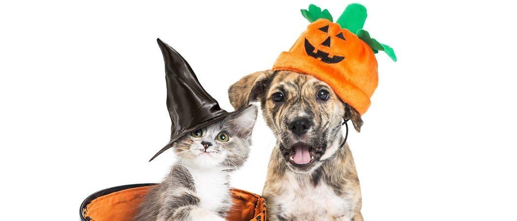 Disfraces caseros de Halloween para tu mascota