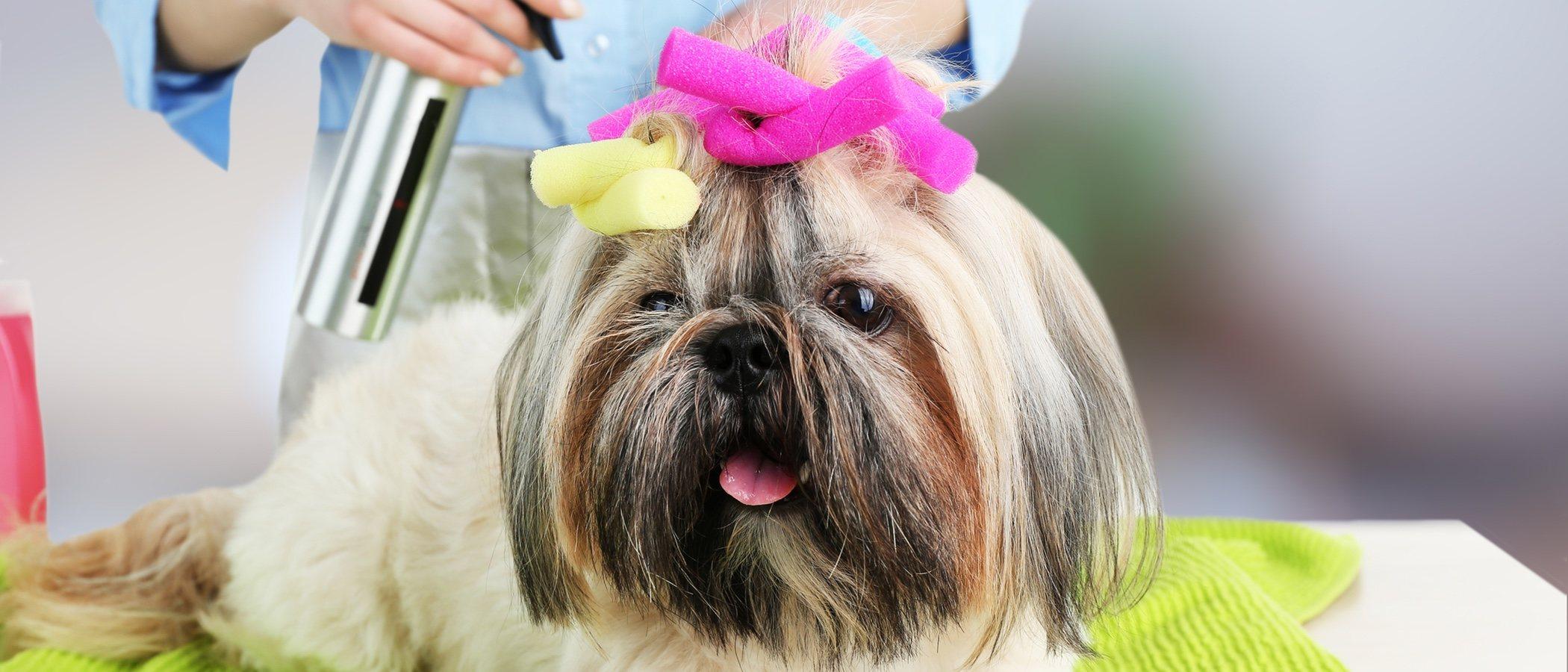 Cómo hacer una sesión de peluquería canina en casa