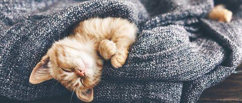 Cómo fortalecer el sistema inmunológico de los gatos