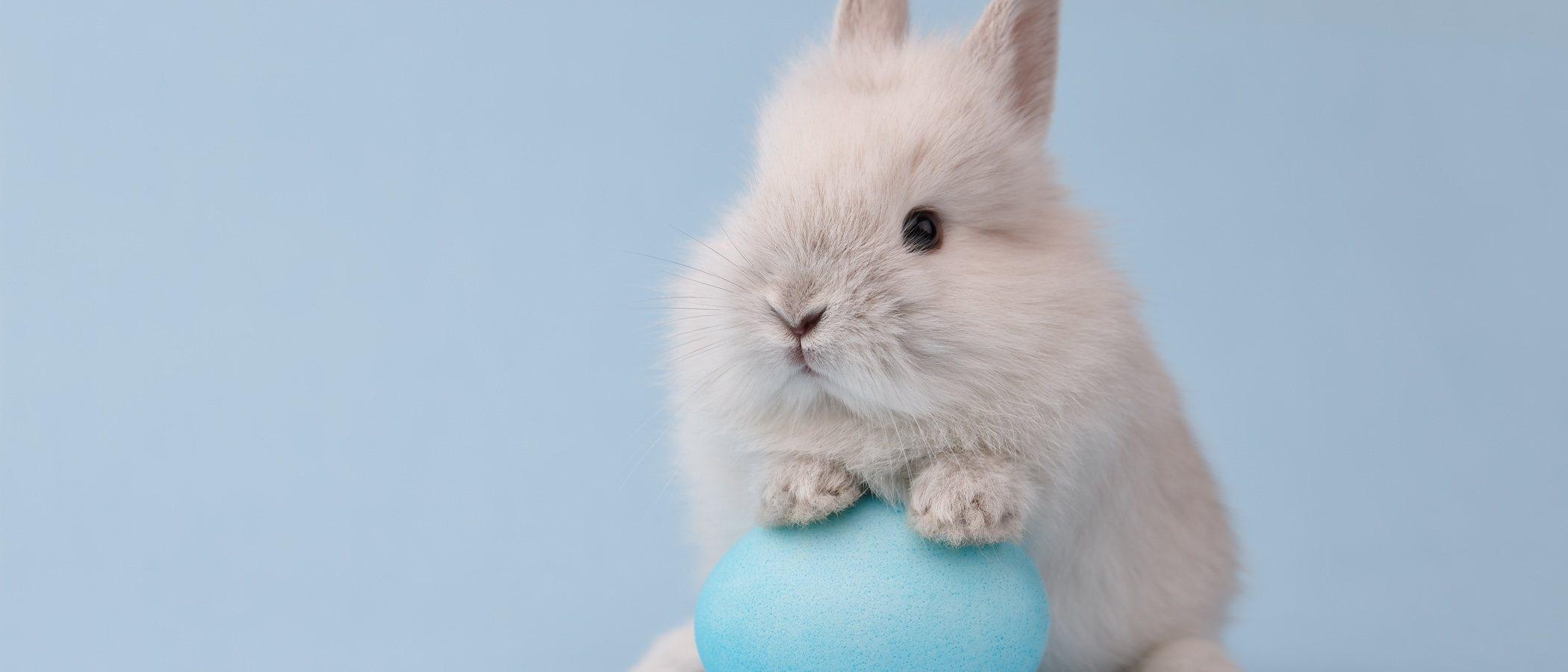 Caída del pelo en conejos: razones distintas a la muda común