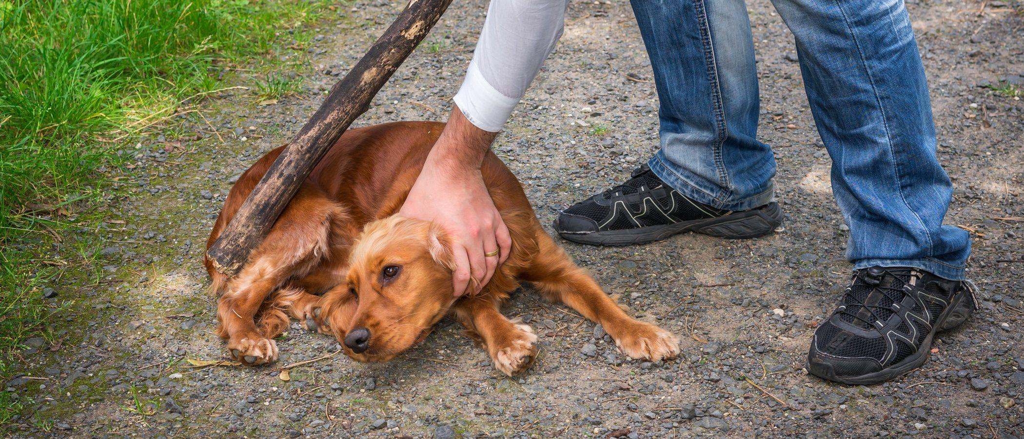 Cómo actuar si eres testigo de maltrato animal