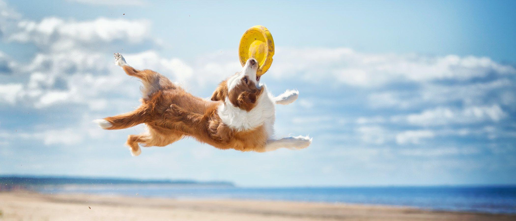 Cómo fortalecer el sistema inmunológico de los perros