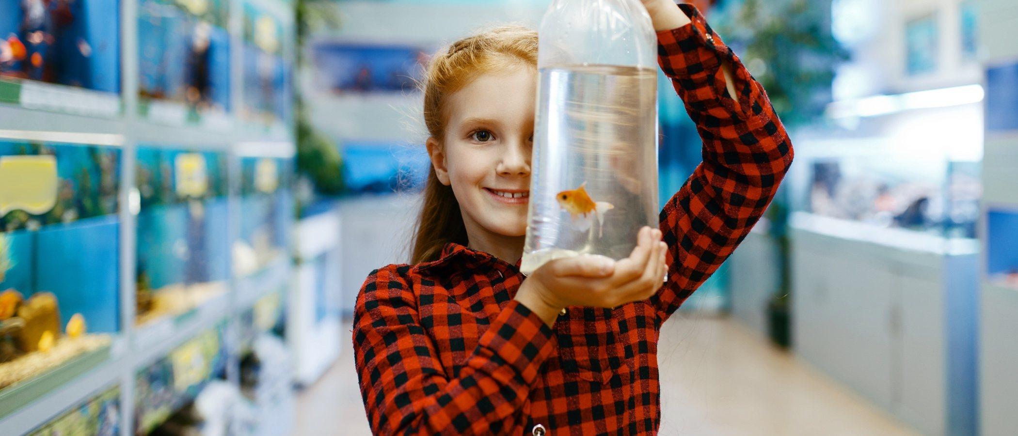 Cómo transportar a un pez cuando sale del acuario