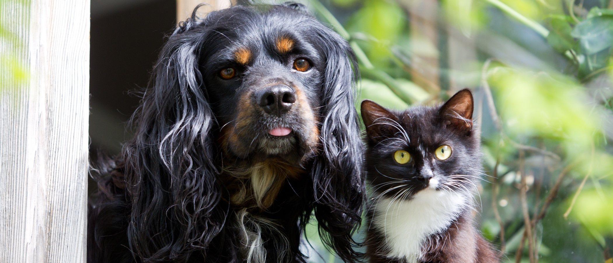 Métodos anticonceptivos para perros y gatos: una alternativa a la castración