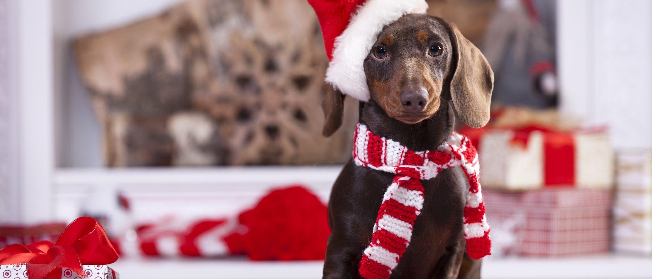 Cómo evitar que tu mascota tenga estrés en Navidad
