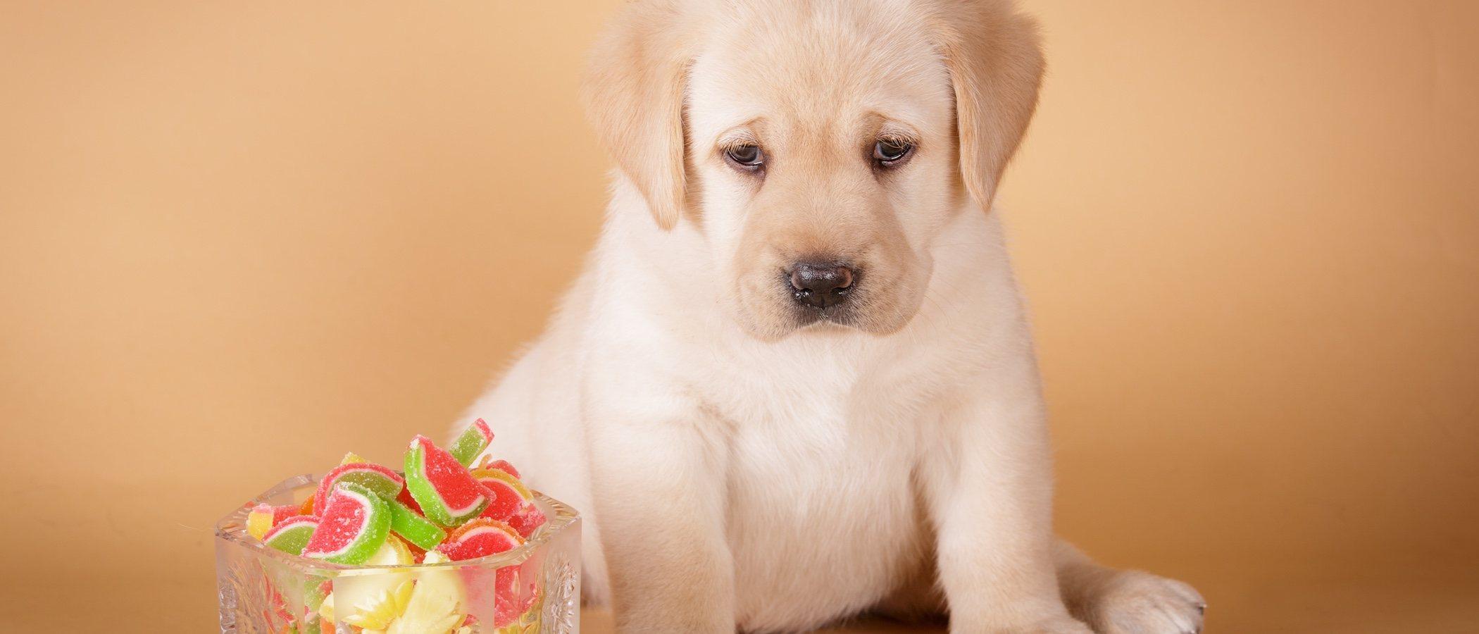 Razones por las que no dar dulces de Navidad a tu mascota