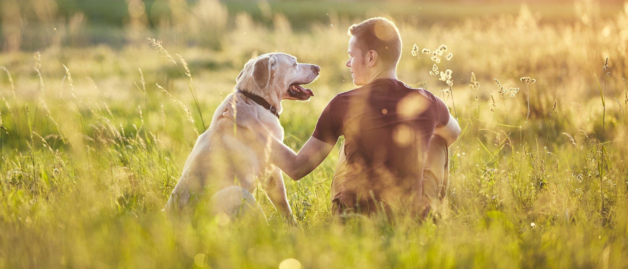 Celebrar San Valentín con tu mascota: un plan enriquecedor