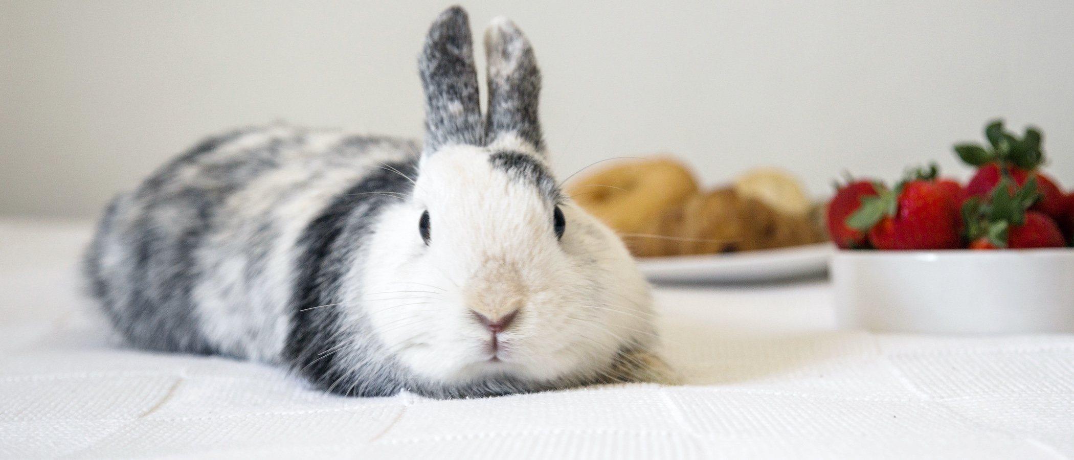 ¿Qué verduras y frutas pueden comer los conejos?