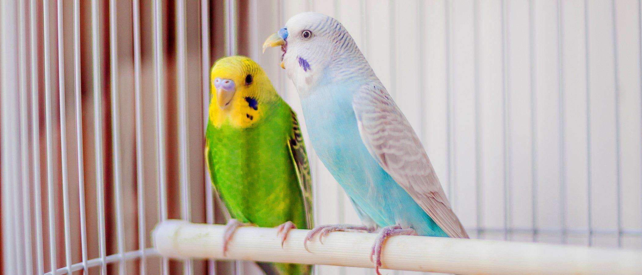 Enfermedades de las aves que se detectan por sus plumas