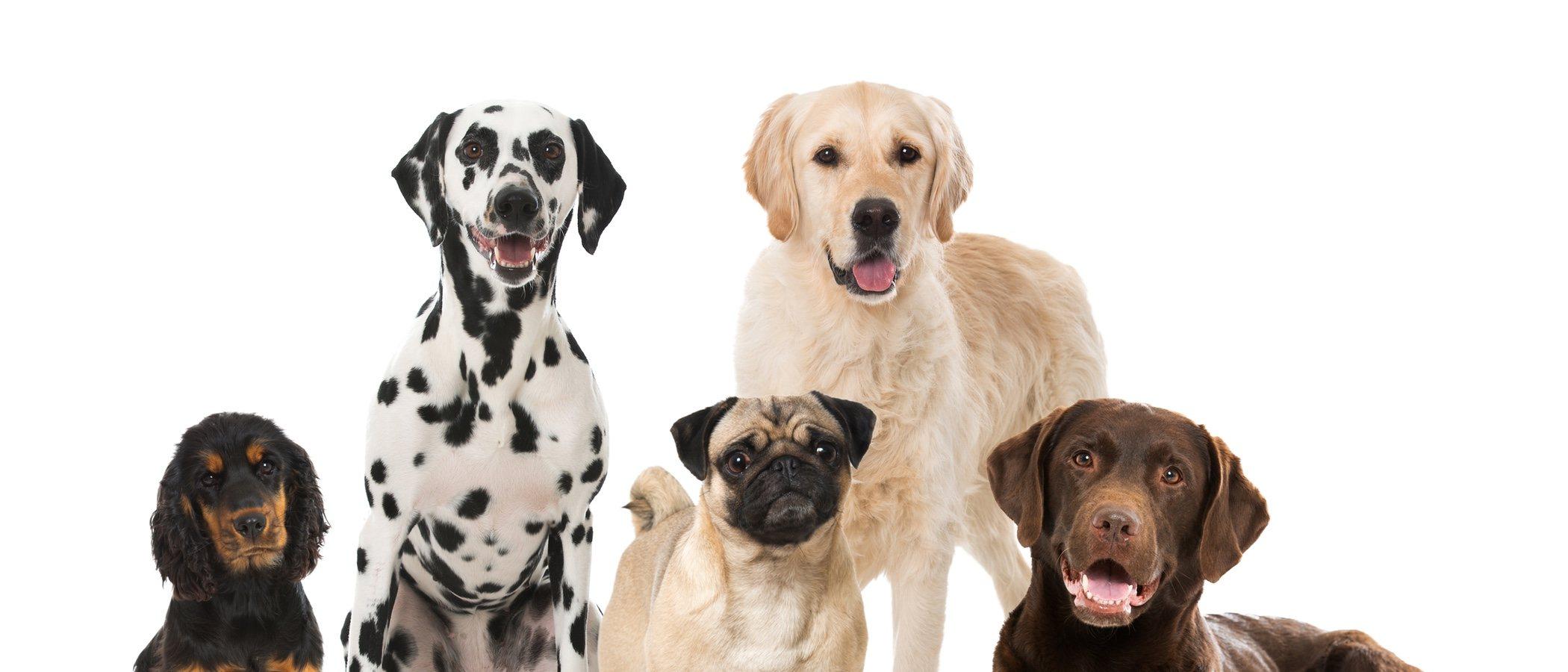 El Museo del perro: estas mascotas ya tienen su propia exposición
