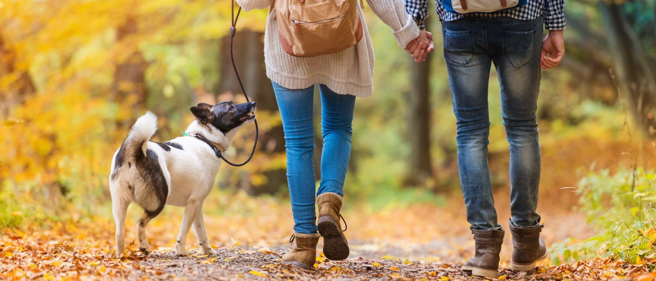Cómo pasear correctamente a un perro