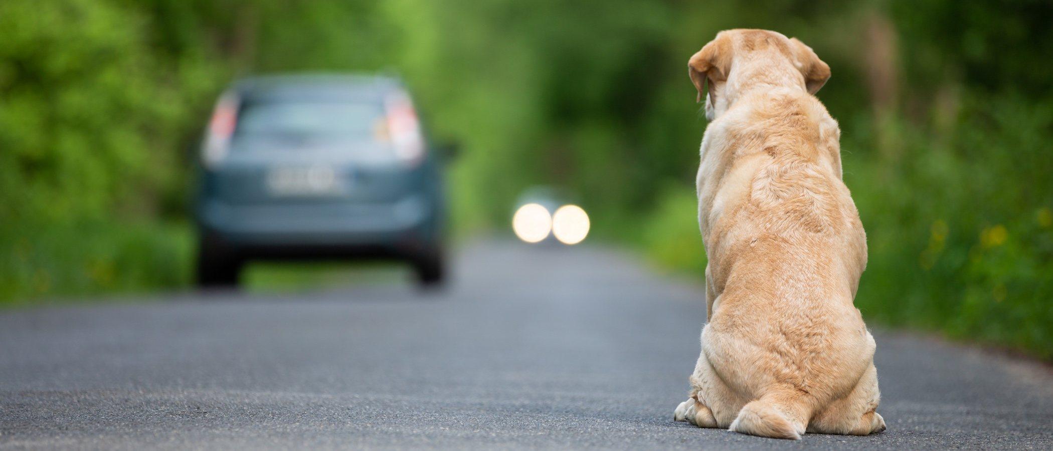 Multas por abandono animal en cada Comunidad Autónoma